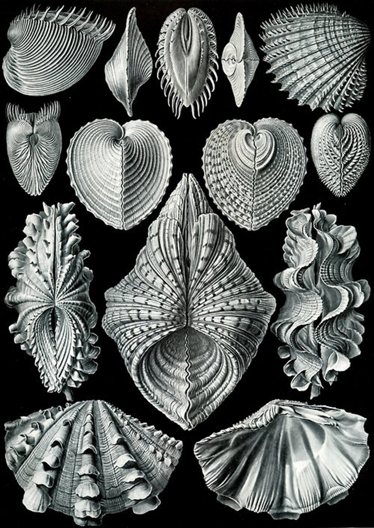 Brian Ringley - art-forms-in-nature_bivalves